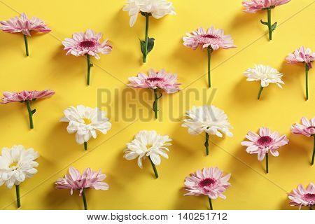 Beautiful flowers on yellow background