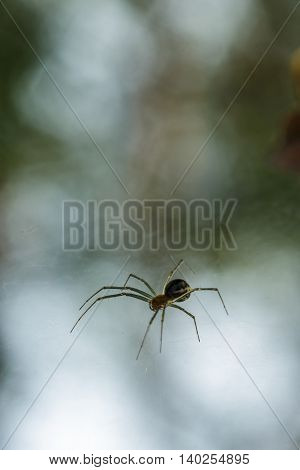 Scary spider with thin legson blurred background