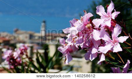 Flowers over Torri del Benaco at Lake Garda