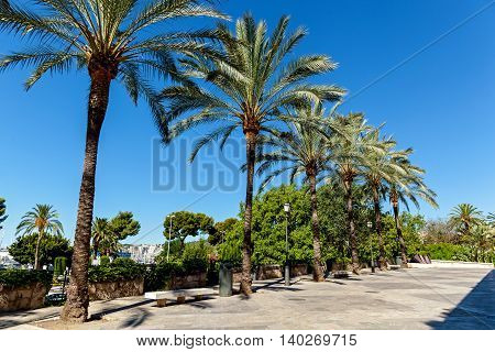 Walking alley with palms against blue skyPalm alley
