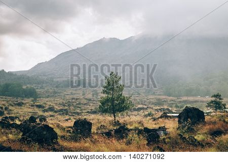 Cloudy day landscape of lava field covered by rich vegetation and lonely green tree near Batur volcano in Bali, Indonesia