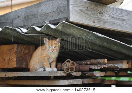 Homeless Kitten