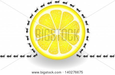 Scalable vectorial image representing a ants around lemon slice, isolated on white.