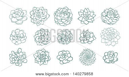 Succulent illustration line sketch set green on white background