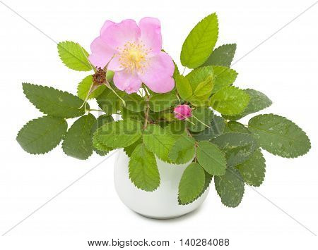 Branch Of Dog Rose With Leaves, Flower And  One Bud In A Ceramic Flower Vase. Isolated On White Back