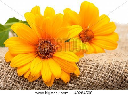 Orange Osteospermum Daisy Or Cape Daisy Flowers On Decorative Tablecloth, On Sackcloth Background. C