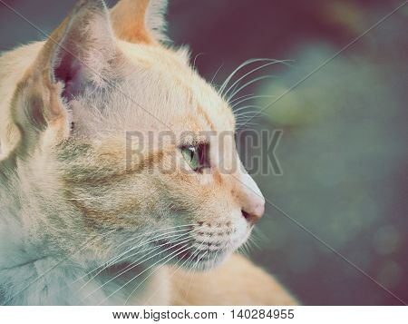 Color filter image, Portrait of cat, Selective focus and close up