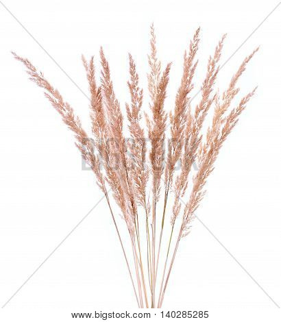 Bunch Of Furry, Meadow, Dry Grass Isolated On White Background.