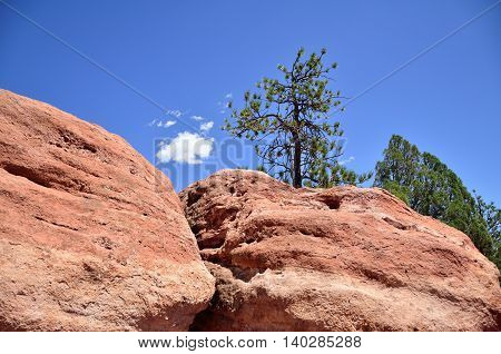 Trees jutting out of large red rock formations in Garden of the Gods, Colorado