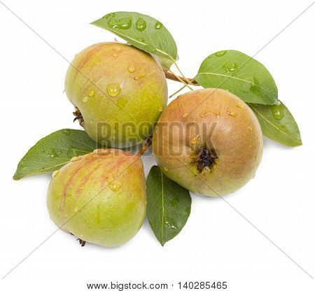 Fresh Pears With Leaves And Drops Of Water Isolated On A White.