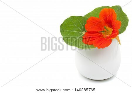 Beautiful flower nasturtium with green leaves in a ceramic vase flowerpot. Isolated on white with empty space for your text.