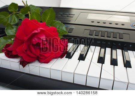 Background of synthesizer keyboard with rose close-up.