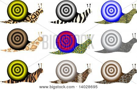 nine colorful snails