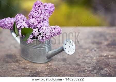 Beautiful lilac flower bouquet in spring in a watering can
