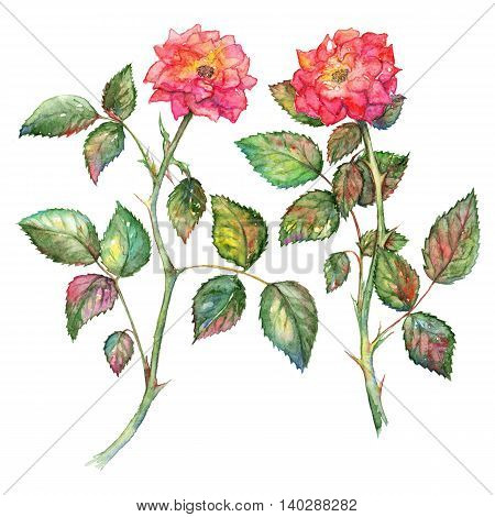 Pair of watercolor pink roses isolated clip art