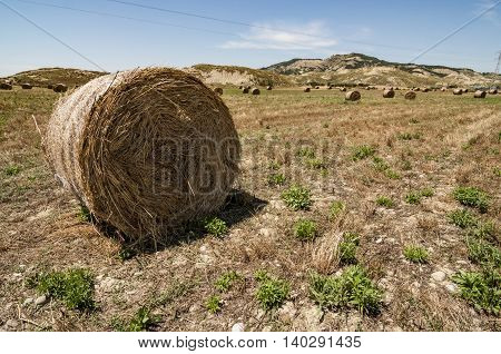 Meadow of hay bales in Basilicata region in Italy