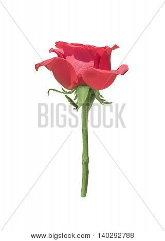 Red rose flower photo isolated over white background