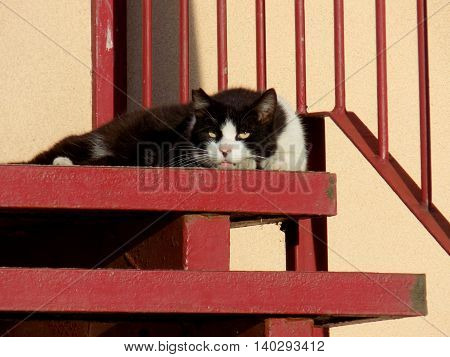 Cat lies on stairs during sunny day