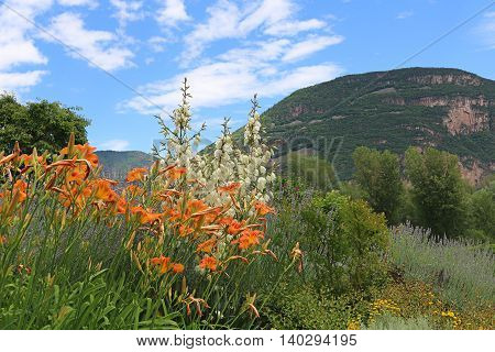 Italian Landscape With Mediterranean Plants