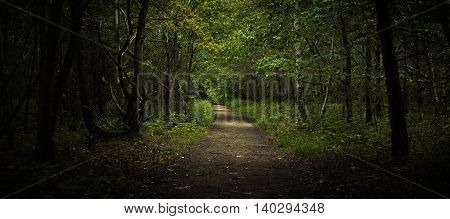 Beautiful green mixed forest with pathway background