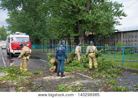 SAINT PETERSBURG, RUSSIA - JUNE 16, 2016: Emergency workers are clearing the roadway from the collapsed old tree