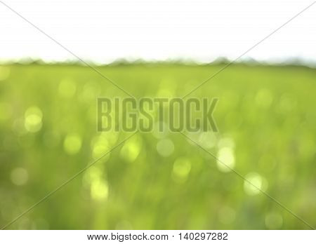 colorful background in green colors the bokeh effect with white copy space for text