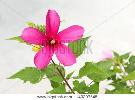 beautiful pink flower on the stem and place for text