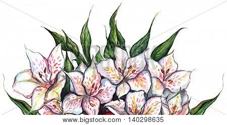 White flowers alstroemeria bouquet composition isolated