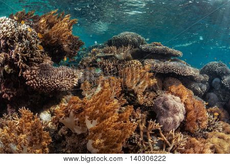 Corals in the tropical sea