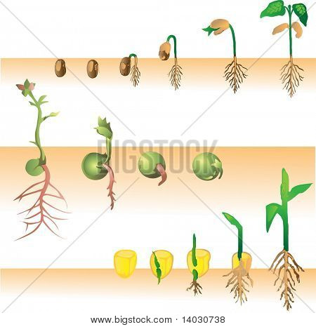 Collection of plant growing vector illustration