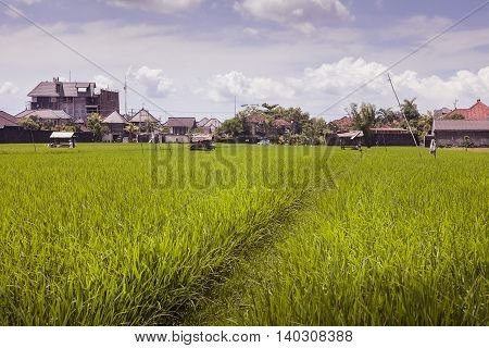 Small village in the rice field, Bali, Indonesia