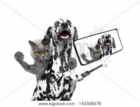 dog and cat photographed selfie on the phone -- isolate on white background