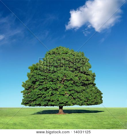 perfect tree against blue sky with white cloud