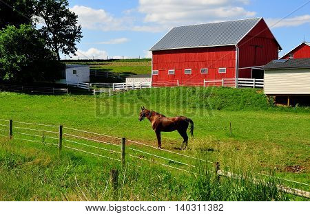 Lancaster County Pennsylvania - JUne 6 2015: A chestnut brown horse in its pasture next to a red barn on an Amish farm
