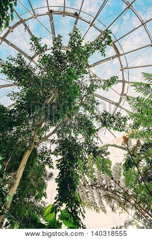 Tropical flora growing in giant glass biosphere