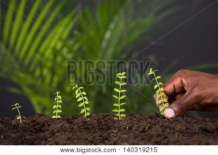 Close-up Of Person's Hand Planting Plant In Soil