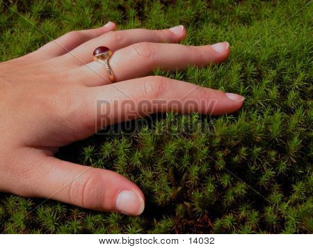 Woman Hand And Moss