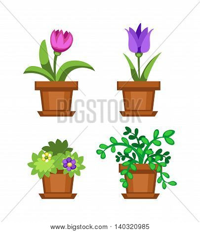 Flat flower pot and flower pot with colorful flowers.