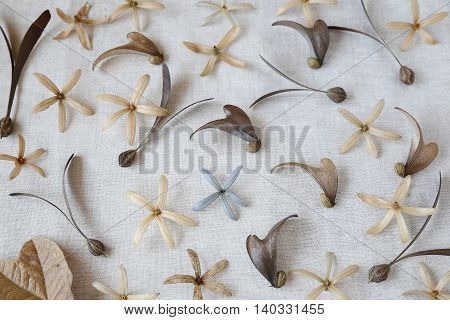 dried Autumn flowers,seeds and leaves natural background