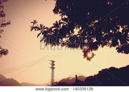 Vintage Filter : Silhouette Of Sunset Scene With Tree At Side Road