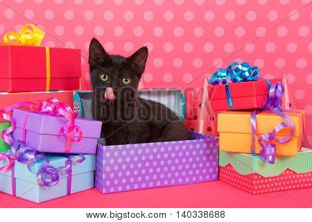Fuzzy black kitten with yellow eyes tongue sticking out sitting in purple spotted birthday present box with colorful presents stacked around bright pink table pink polka dot background. Copy Space