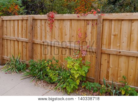 Fence in the fall with leaves and vines