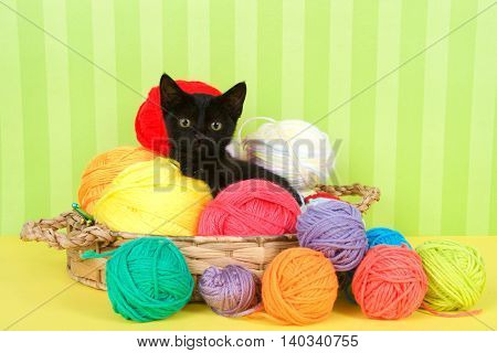 Fuzzy black kitten enjoying a comfortable spot in a crochet basket full of yarn balls. Yellow floor with green striped background. Copy Space