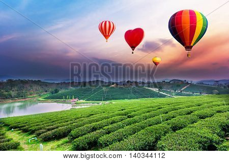 Colorful Hot-air Balloons Flying Over Tea Plantation Landscape At Sunset.