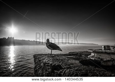 seagull in Whitby in Yorkshire England UK