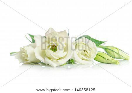 Beautiful White Eustoma Flowers Isolated On White Background