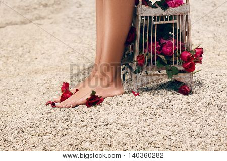 Close up image of girl`s legs with birdcage full of red flowers