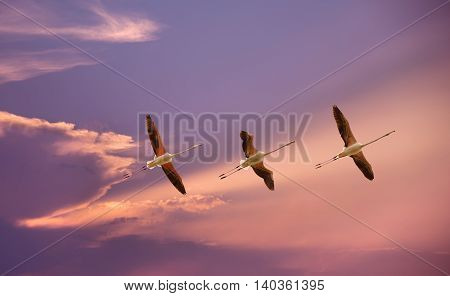 Beautiful tropical birds in flight against blue sky panoramic image