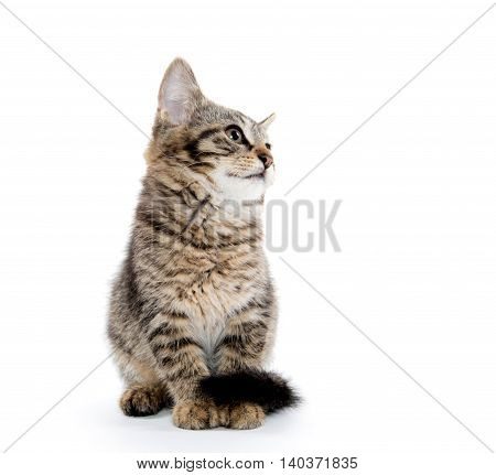 Cute Tabby Isolated On White