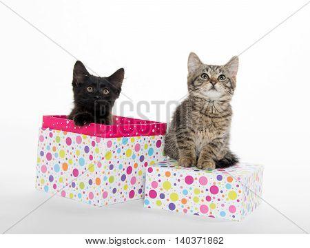 Tabby And Black Kitten